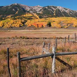 Colorado Mountain Gold by John Bartelt
