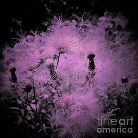 Colored Milk Thistle Seeds by Suzanne Wilkinson