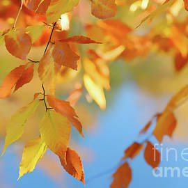 Colorful Fall Leaves by Ava Reaves