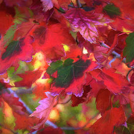 Colorful Fall Leaves by Donna Kennedy