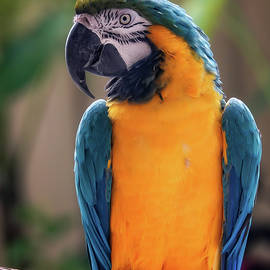 Colorful Feathers of a Parrot by Kathi Isserman