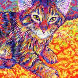 Colorful Maine Coon Kitten by Rebecca Wang