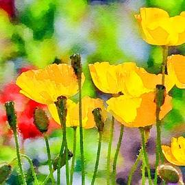 Colorful Poppies Watercolor by Susan Rydberg