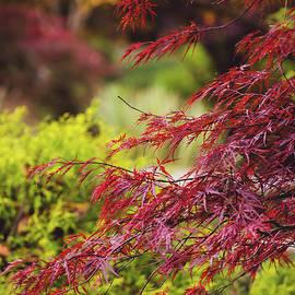 Colors of Autumn by Mary Ann Artz