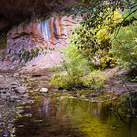 Colors of the Canyon by Bonny Puckett