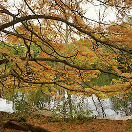 Colours of Autumn by Robert Murray