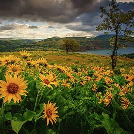 Columbia Gorge Blooms by Dan Mihai