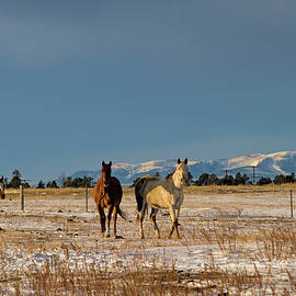 Come on Ponies by Alana Thrower
