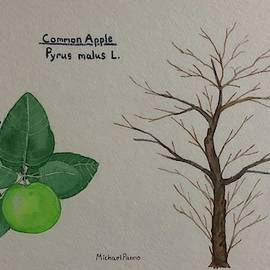Common Apple Tree ID W/ Border by Michael Panno