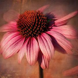 Cone Flower Drama by Terry Davis