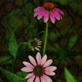 Coneflower Abstract by Marilyn DeBlock
