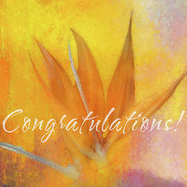 Congratulations to You by Terry Davis