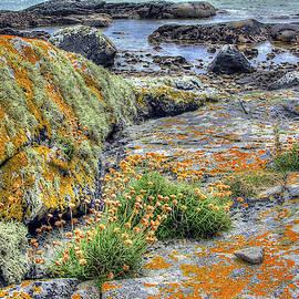 Connemara by Randall Dill