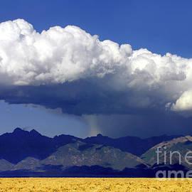 Cool Colorado Rain by Douglas Taylor