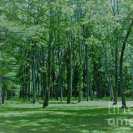 Cool Green Forest by Suzanne Wilkinson