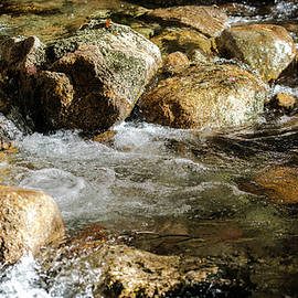 Cool Waters by Karen Wiles