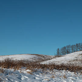 Copse Of Trees On A Cold Blue Day by Karen Rispin