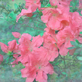 Coral Azaleas by Aimee L Maher ALM GALLERY