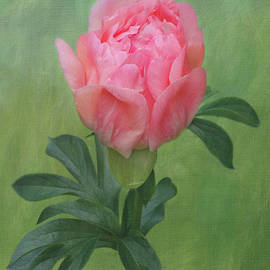 Coral Peony 4 by Isabela and Skender Cocoli