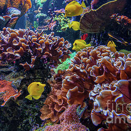 Coral Reed with Colorful Fish by RC- Photography LLC