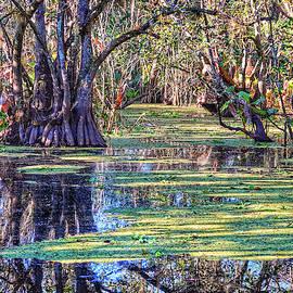 Corkscrew Swamp by Kathi Isserman