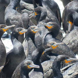 Cormorant colony by Gareth Coombs