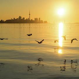 Cormorants and Skyscrapers - Brilliant Toronto Sun Rise with Urban Wildlife by Georgia Mizuleva