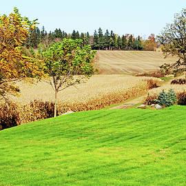 Corn Harvest Time by Debbie Oppermann