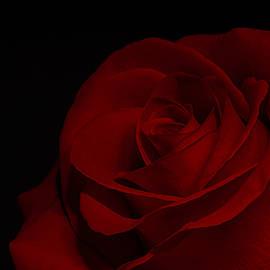 Corner Rose by Sandi Kroll
