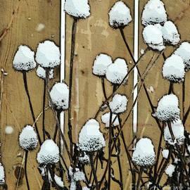 Cotton Balls by Diana Rajala
