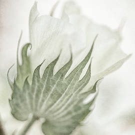 Cotton Floral  by Nancy Carol Photography
