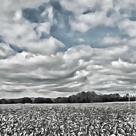 Cotton Sky by Tracy Ruckman