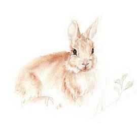 Cottontail Rabbit Kitten by Karen Rispin