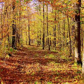 Country Lane by Susan Crossman Buscho