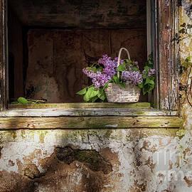 Country Lilacs by Debra Fedchin