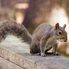 Country Squirrel by Rick Davis