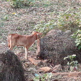 Cow and children cow in Forest by Suchit Sah
