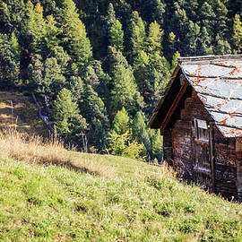 Cow in the Alps by Alexey Stiop