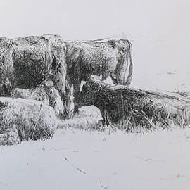 Cows at Pasture by David Beglaryan