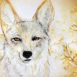 Coyote Eyes Of Enchantment by Barbara Chichester