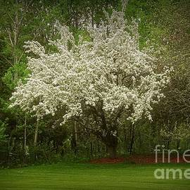 Crabapple Tree at the Edge of the Wood by Mary Machare