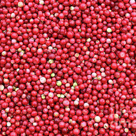 Cranberries - small red acid berries used in cooking by Michal Boubin