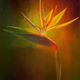 Crane Lily by Christina Ford