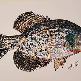 Crappie #2 by Terry Feather