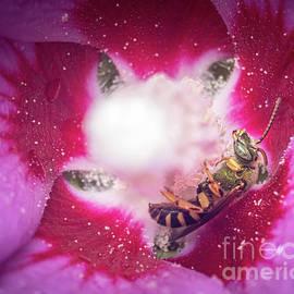Crazy Eyed Bee by Jeff Maletski