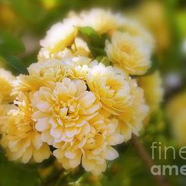 Creation by God - Lady Banks Soft Focus by Karin Gandee