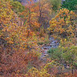Creekside Chromatic Tapestry Of Autumn by Bijan Pirnia