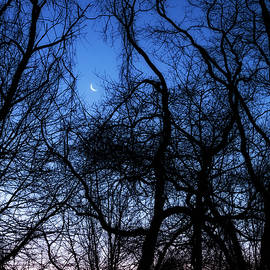 Crescent Moon Sunrise by Denise Harty