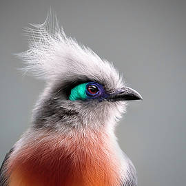 Crested Coua by Wes and Dotty Weber