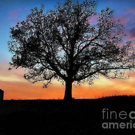 Crib And Tree At Dusk by Kathy M Krause